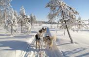 Winter Adventure Levi